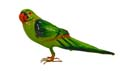 Golu Miniature Parrot - Large
